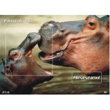mec839 - Fauna africana - Hipopotamul - colita n
