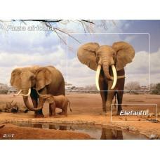mec1008 - Fauna africana - Elefantul - colita n