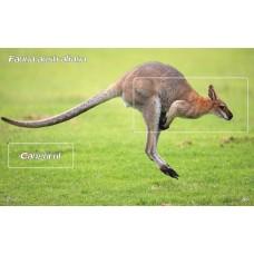mec1205 - Fauna australiana - Cangurul - colita n