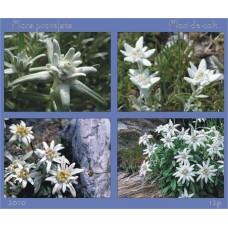 mec1208 - Flora - Flori de colt - bloc n