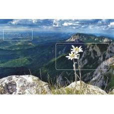 mec1209 - Flora - Flori de colt - colita n