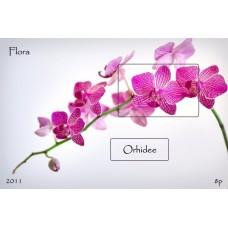 mec1288 - Flora - Orhidee - colita n