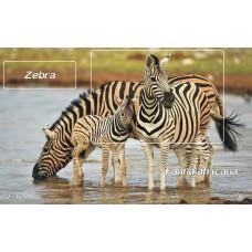 mec1345 - Fauna africana - Zebra - colita n