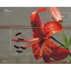 mec1349 - Flora - Crini - colita n